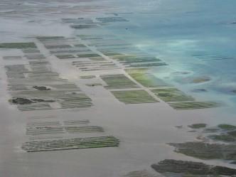 Les parcs à huîtres du côté de Blainville-sur-Mer (Manche)