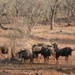 A Hluhluwe-Imfolozi park (Afrique du Sud)