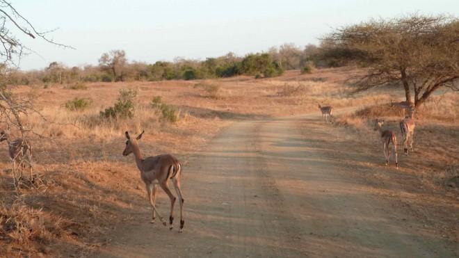 Hluhluwe Imfolozi Game Reserve (Afrique du Sud)