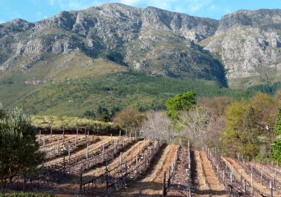En Afrique du Sud, les vignes du côté de Franschhoek en... 2010.