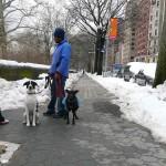 Promeneur de chiens près de Central Park