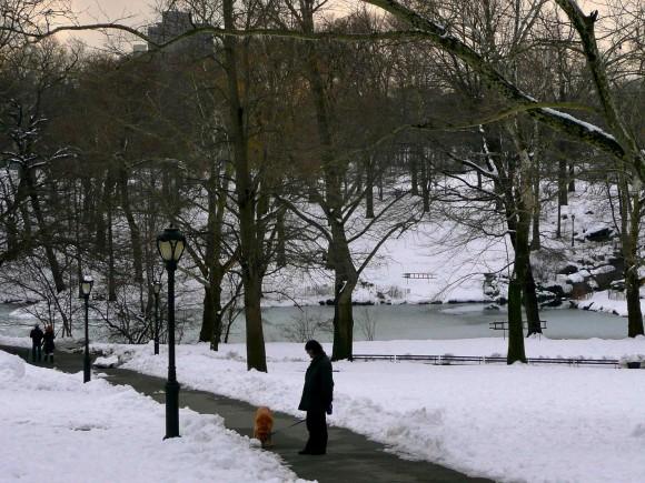 Central Park dans la neige