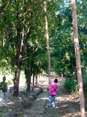 Des échelles de bambous pour grimper dans les arbres.