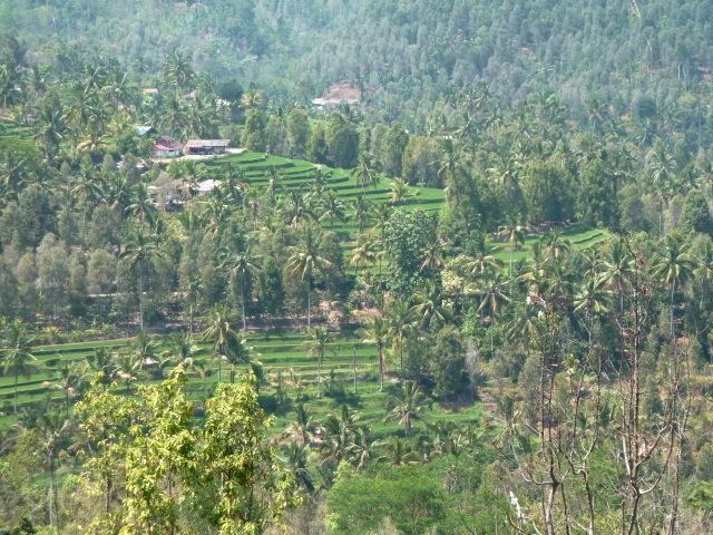 Rizières et plantations de café et de clous forment le paysage de Munduk.