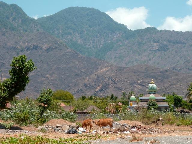 Vue de la plage, mosquée et vaches à Pemuteran.