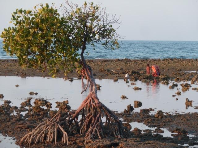 A Pemuteran, on ramasse des coquillages à marée basse.