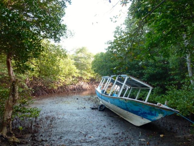 Taman nasional Bali barat : la mangrove
