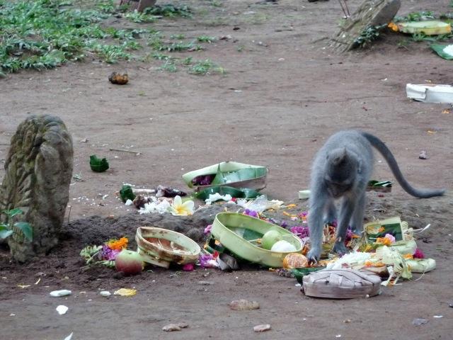 Les singes dans le cimetière de Monkey forest (Ubud)