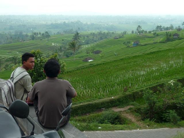 Les rizières de Jatiluwih, à Bali.