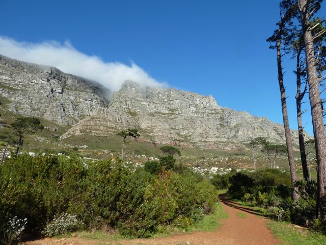 Au pied de Table Mountain, Le Cap, Afrique du Sud.