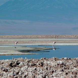 Salar de atacama : laguna Chaxa - 04