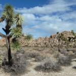 Joshua tree national park - 048