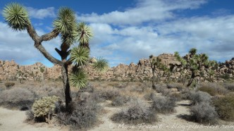 Joshua tree national park - 048