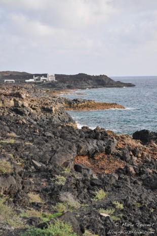 Los cocoteros, à Lanzarote (Canaries).