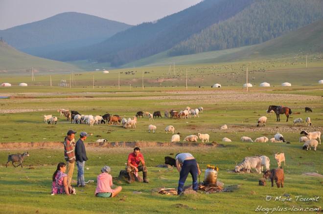 Les yacks et autres bêtes autour du khorkhog (Mongolie).